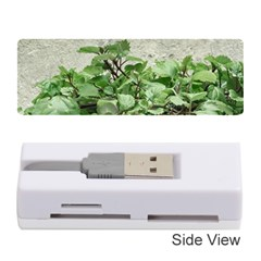Plants Against Concrete Wall Background Memory Card Reader (stick)  by dflcprints