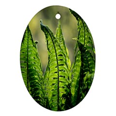 Fern Ferns Green Nature Foliage Ornament (oval) by Nexatart