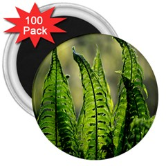 Fern Ferns Green Nature Foliage 3  Magnets (100 Pack)