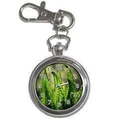 Fern Ferns Green Nature Foliage Key Chain Watches by Nexatart