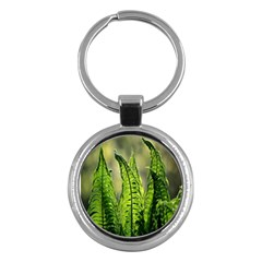 Fern Ferns Green Nature Foliage Key Chains (round)  by Nexatart