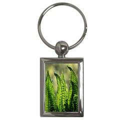 Fern Ferns Green Nature Foliage Key Chains (rectangle)  by Nexatart