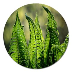 Fern Ferns Green Nature Foliage Magnet 5  (round)