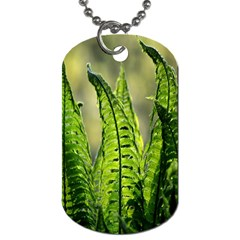 Fern Ferns Green Nature Foliage Dog Tag (one Side) by Nexatart