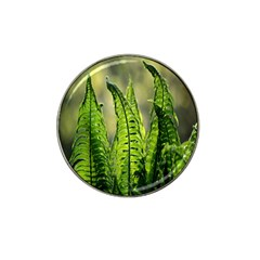 Fern Ferns Green Nature Foliage Hat Clip Ball Marker (10 Pack) by Nexatart
