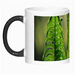 Fern Ferns Green Nature Foliage Morph Mugs by Nexatart