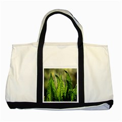 Fern Ferns Green Nature Foliage Two Tone Tote Bag by Nexatart