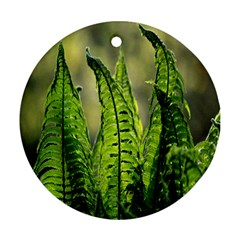 Fern Ferns Green Nature Foliage Round Ornament (two Sides) by Nexatart