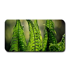 Fern Ferns Green Nature Foliage Medium Bar Mats by Nexatart
