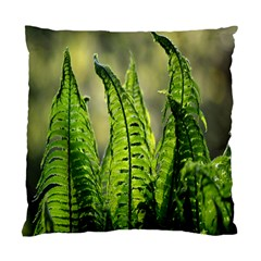 Fern Ferns Green Nature Foliage Standard Cushion Case (one Side) by Nexatart