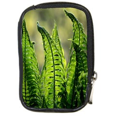 Fern Ferns Green Nature Foliage Compact Camera Cases