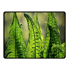 Fern Ferns Green Nature Foliage Fleece Blanket (small) by Nexatart