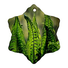 Fern Ferns Green Nature Foliage Ornament (snowflake) by Nexatart