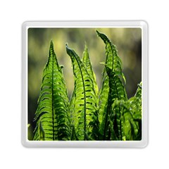 Fern Ferns Green Nature Foliage Memory Card Reader (square)  by Nexatart