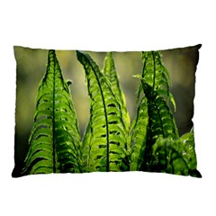 Fern Ferns Green Nature Foliage Pillow Case (two Sides) by Nexatart