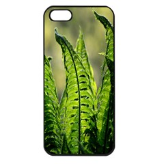 Fern Ferns Green Nature Foliage Apple Iphone 5 Seamless Case (black) by Nexatart