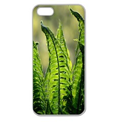 Fern Ferns Green Nature Foliage Apple Seamless Iphone 5 Case (clear) by Nexatart