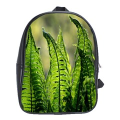 Fern Ferns Green Nature Foliage School Bags (xl)  by Nexatart