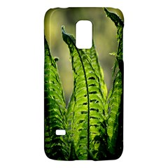Fern Ferns Green Nature Foliage Galaxy S5 Mini by Nexatart