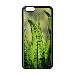 Fern Ferns Green Nature Foliage Apple Iphone 6/6s Black Enamel Case by Nexatart