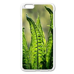 Fern Ferns Green Nature Foliage Apple Iphone 6 Plus/6s Plus Enamel White Case by Nexatart