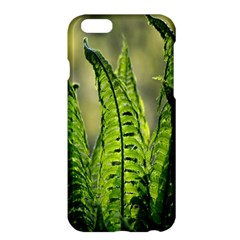 Fern Ferns Green Nature Foliage Apple Iphone 6 Plus/6s Plus Hardshell Case by Nexatart