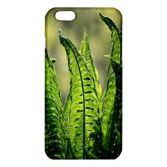 Fern Ferns Green Nature Foliage Iphone 6 Plus/6s Plus Tpu Case by Nexatart