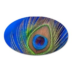 Blue Peacock Feather Oval Magnet by Amaryn4rt
