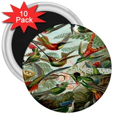 Beautiful Bird 3  Magnets (10 Pack)  by Nexatart