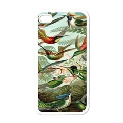 Beautiful Bird Apple Iphone 4 Case (white)