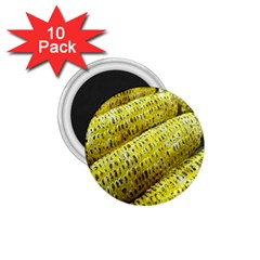 Corn Grilled Corn Cob Maize Cob 1 75  Magnets (10 Pack)