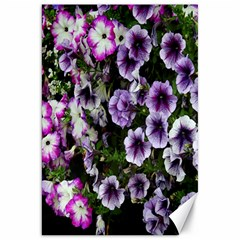 Flowers Blossom Bloom Plant Nature Canvas 20  X 30