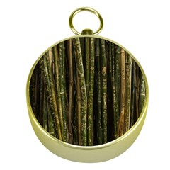 Green And Brown Bamboo Trees Gold Compasses by Nexatart