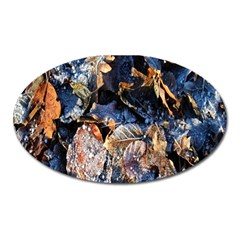 Frost Leaves Winter Park Morning Oval Magnet by Nexatart