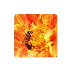 Honey Bee Takes Nectar Square Magnet