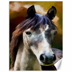 Horse Horse Portrait Animal Canvas 12  X 16
