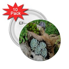 Plant Succulent Plants Flower Wood 2 25  Buttons (10 Pack)  by Nexatart