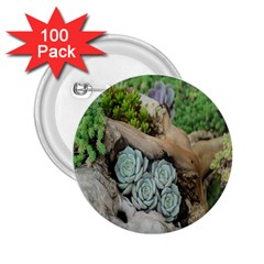 Plant Succulent Plants Flower Wood 2 25  Buttons (100 Pack)  by Nexatart