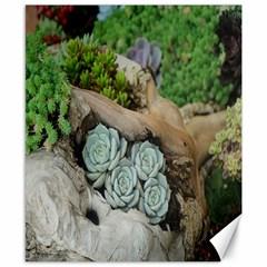 Plant Succulent Plants Flower Wood Canvas 8  X 10  by Nexatart
