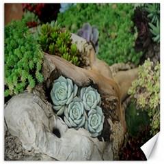 Plant Succulent Plants Flower Wood Canvas 12  X 12   by Nexatart
