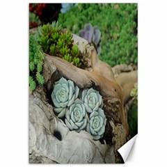 Plant Succulent Plants Flower Wood Canvas 20  X 30   by Nexatart