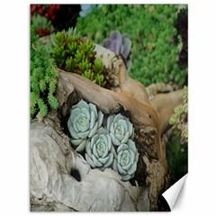 Plant Succulent Plants Flower Wood Canvas 36  X 48   by Nexatart