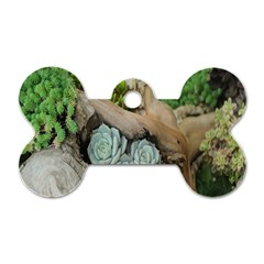 Plant Succulent Plants Flower Wood Dog Tag Bone (two Sides) by Nexatart