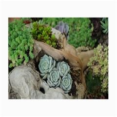 Plant Succulent Plants Flower Wood Small Glasses Cloth (2 Side)