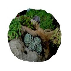 Plant Succulent Plants Flower Wood Standard 15  Premium Flano Round Cushions by Nexatart
