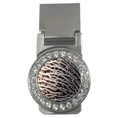 Seed Worn Lines Close Macro Money Clips (cz)  by Nexatart