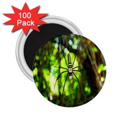 Spider Spiders Web Spider Web 2 25  Magnets (100 Pack)