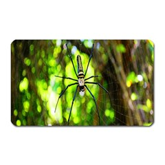 Spider Spiders Web Spider Web Magnet (rectangular)