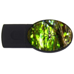 Spider Spiders Web Spider Web Usb Flash Drive Oval (2 Gb) by Nexatart