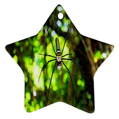 Spider Spiders Web Spider Web Star Ornament (two Sides) by Nexatart